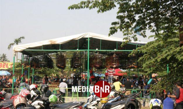 Launching Puspem Tangerang – Nyaris Tembus 1.000 Peserta, Kacer Yakuza dan AM Diamblo Nyaris Nyeri, Murai Batu Xlrose Gasak Kelas Utama