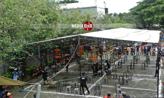 Jelang Road To Murai Batu Champion – Tiketnya Masih Diburu, Kelas – kelas Utama Murai Batu full!