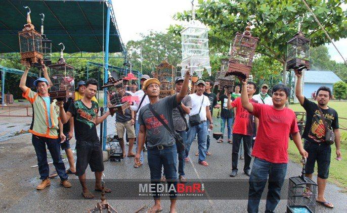 Saat Angkat Sangkar Bersama Pleci Mania Kalimantan Barat