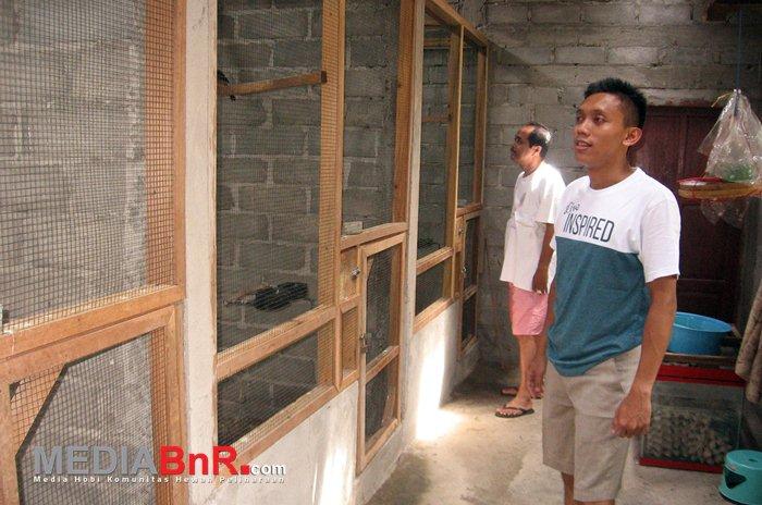 Sangkar Rapi Ukuran 1,5 x 2,3 Meter