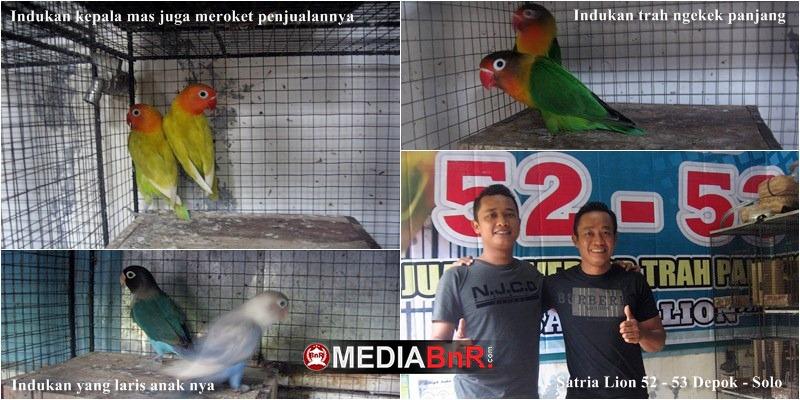 Kisah Sukses Mantan Operator Beralih Profesi Ternak Love Bird