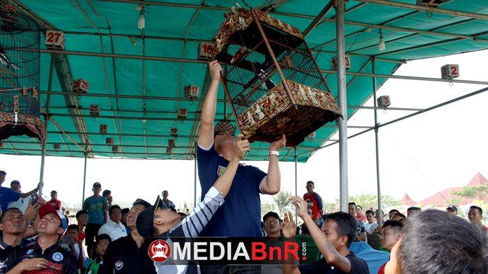 Sekretaris Daerah Kabupaten Pesawaran ikut menggantang sebagai tanda hajat akbar kicau mania siap dihelat