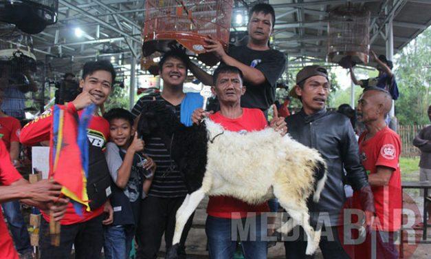 MB SAKIRA DAN KENARI TASBIH DAPAT KAMBING, RADJA TO MAMPRANG DI 25 GANTANGAN