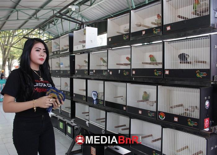 Astro Boy Borong Juara, Komunitas Kenari Rayakan Selebrasi