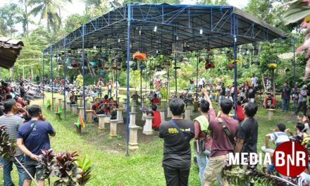 Singo Edan Hattrik, Sumber Raya Group & Bambang Kenditan Raih Juara Umum