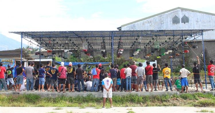 Sundigong Ancaman di Murai Batu Ekor Hitam, Mr Mi'an AF Jepara dan Bkm Sipol Temanggung Rebut Juara Umum