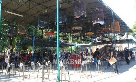 Sincan Menghentak, Laskar Timur Tak Terhadang – Rumah Manuk & H5n1 Team Bersanding Di Tahta Juara