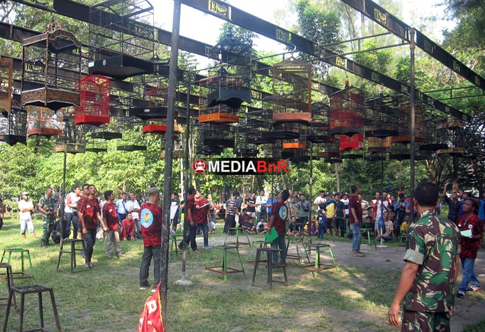 Gilang Orbitkan Kacer dan Duta Juliatmono Prestasi di Cucak Hijau