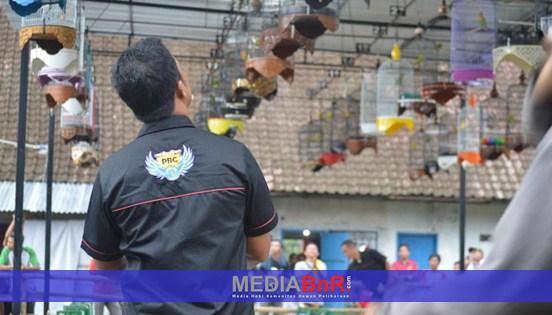 Sinchan Mencibir, Adi Karya Eksis di Kelas Kenari