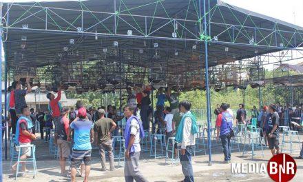 7 Bintang Comeback, Prabu Cabe Rawit Stabil – Karebet, Bom-Bom & Dewa Amoy Solid Perkokoh Pondasi Juara Umum Gonzo Bc