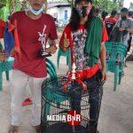 Cetak Double winner Mb Komeng Besutan Budi Rcr Bf Siap Bersaing Di Murai Batu Champions