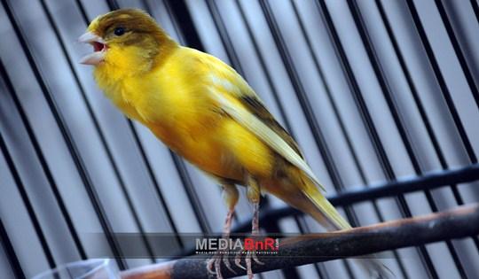 Penampilan Worry Free Puaskan Mustika