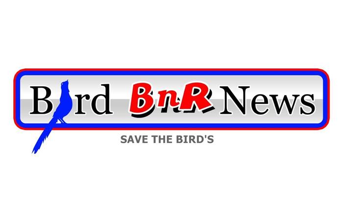 BBN Media Baru BnR