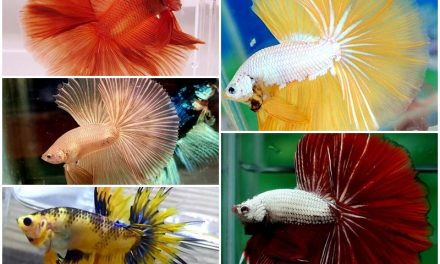 BnR BETTA COMMUNITY