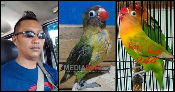Ring Exo Jangkrik Pengorbit Burung Jawara