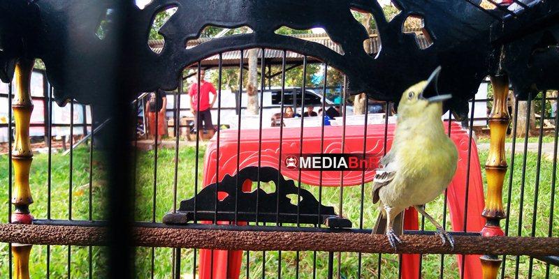 BnR Angkat Burung Cipoh/Sertu