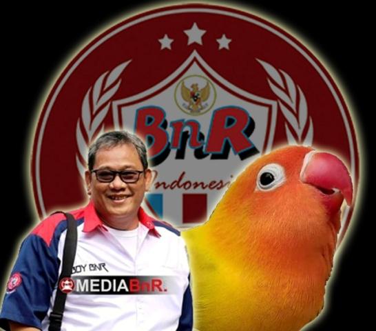 LOVE BIRD FIGHTER VS LOVE BIRD UMUM