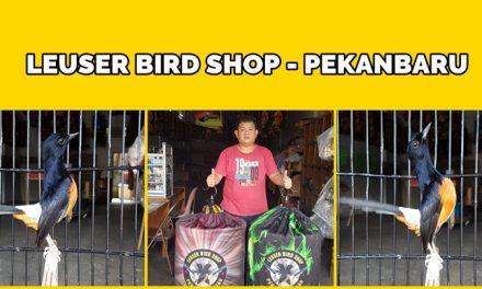 Leuser Bird Shop Pekanbaru – Riau, Spesialis Penyedia Murai Batu Bahorok dan Marike Berkualitas
