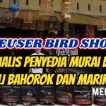 Leuser Bird Shop Pekan Baru Riau,  Spesialis Penyedia Murai Batu Asli Bahorok dan Marike