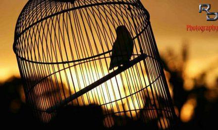Presiden Cup V Love Bird Semua 36