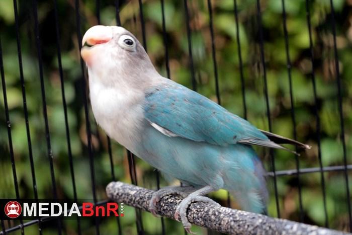 lovebird (dok.mediabnr)