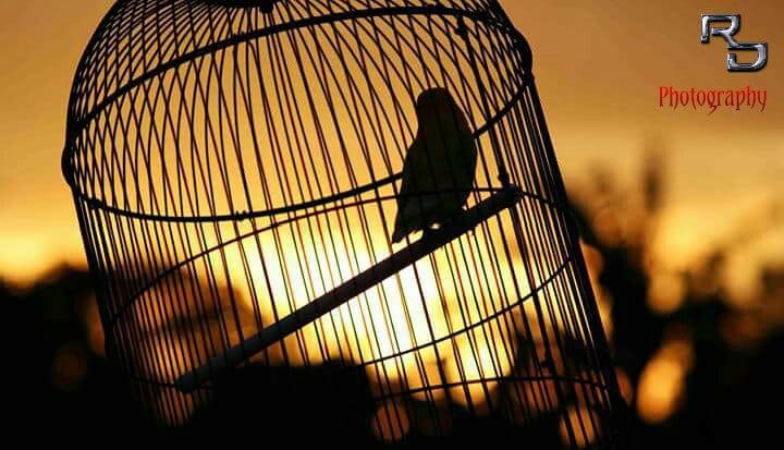 Poin Love Bird BnR Akan Berubah