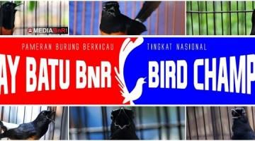 murai batu bird champions