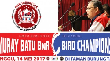murai batu bnr bird champions