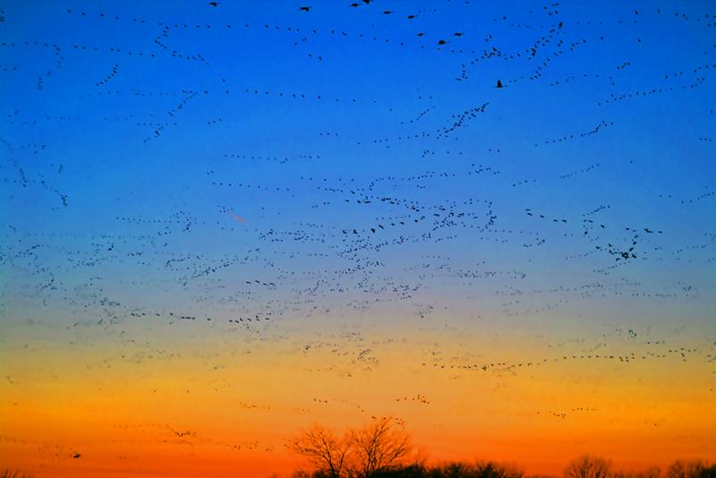 Apakah Akan Berubah Dunia Burung Ini?