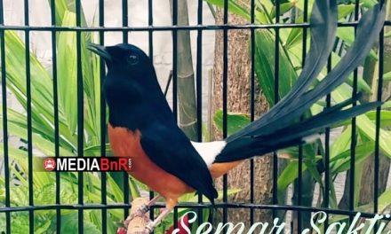 Burung Terbaik BnR Award 2019 Double Winner di BOB Walikota Bogor