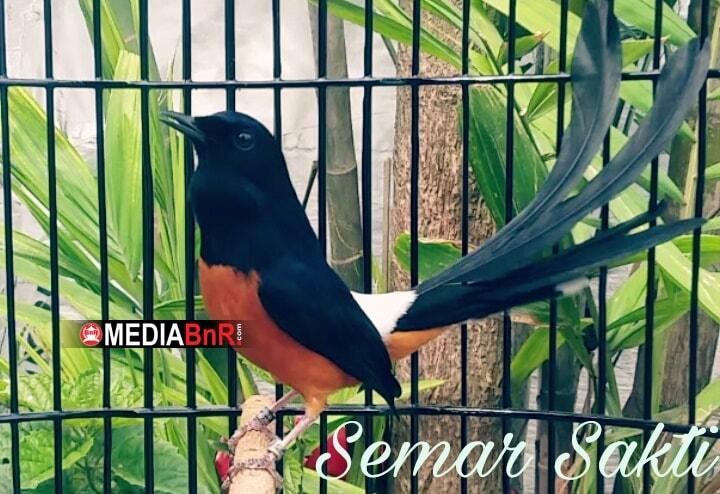 SS Murai Terbaik 2019 BnR Indonesia