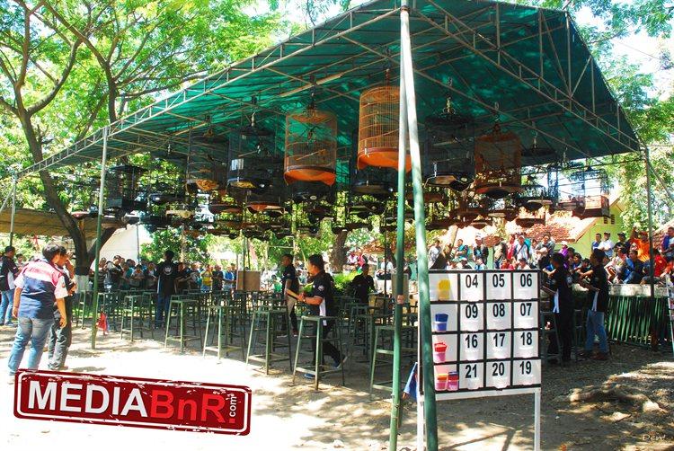 Sak Masek Raja lovebird, Bambang Honda raja SF, Ipan Raja Product BnR