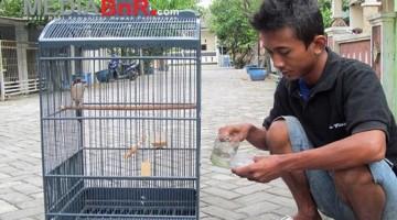 tuangkan ke cepuk minum burung setelah air menjadi dingin (Foto: Herlambang/MediaBnR.Com)